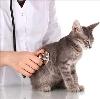 Ветеринарные клиники в Целинном